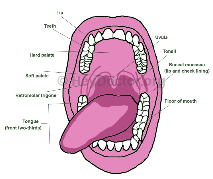 Roof of Mouth Hurts (Swollen) - Causes, Treatment, Self care